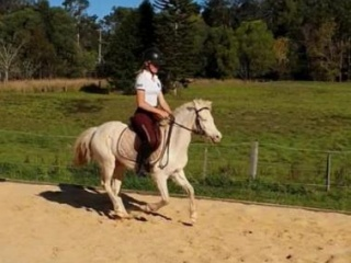 Cremello Riding Pony