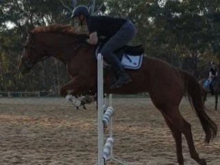 Brave Thoroughbred Mare