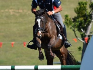Great Future Jumping & Dressage Pony