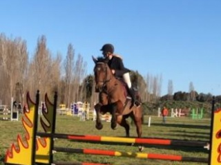 Sweet natured talented jumper