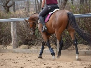 Lovely Quiet Project Horse