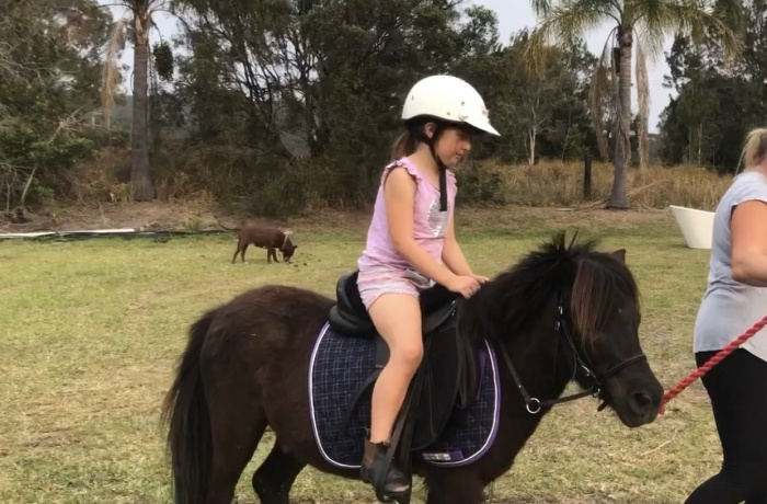 Miniature Horse/Pony in New South Wales