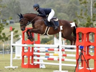 Perfect Junior/Interschool Show Jumper