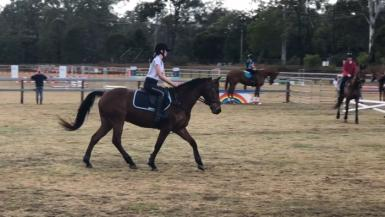 Connemara sport horse for sale