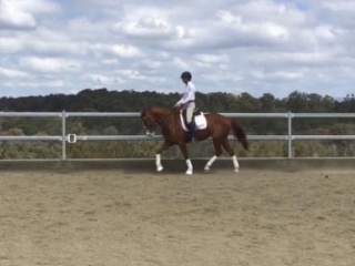 Super flash and fancy dressage mare