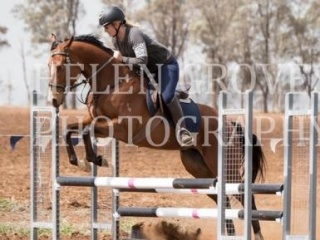 Handsome, Quiet and Talented Showjumper/Eventer