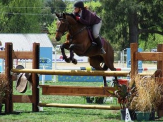 Exceptional Young Rider/Amateur Jumper or Eventer