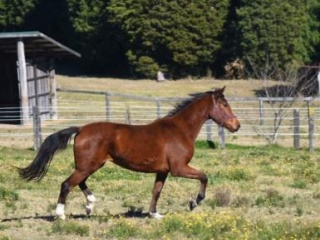 Super mover! Belissimo /Olympic Ferro filly