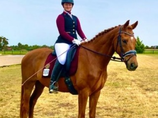 Stunning WB gelding- make an offer