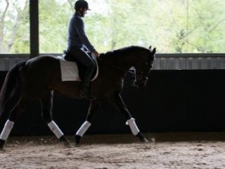 Fancy Lonhro Gelding