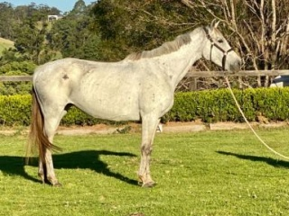 Eventing mare; breed or ride