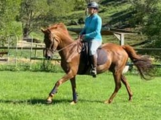 Can be ridden or broodmare