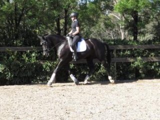 Price Reduced! Stunning Mare Dessage or Show Star!