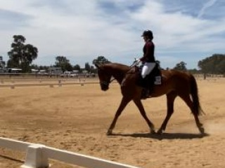 Price Reduced- WB gelding MAKE AN OFFER