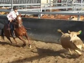 Campdrafting, Working Equitation, All Rounder