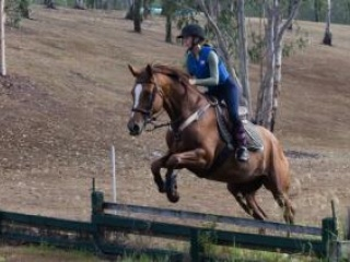 16.3 hh, 14y All Rounder