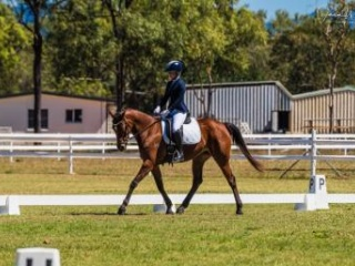 All rounder Mare with an impeccable temperament