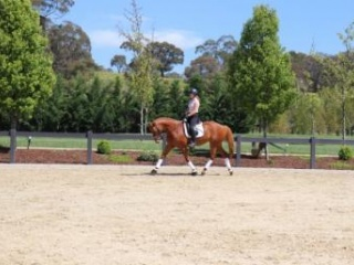 Young Rider Showjumper and 1* Eventer