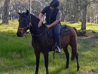 Lovely Trail ride horse with potential