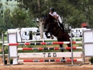 Showjumper / 3* Eventer