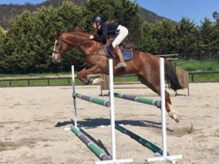 Stunning warmblood - Show jump, dressage or event!