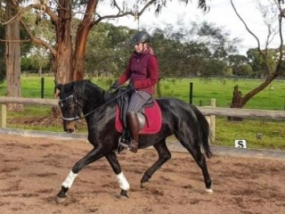 Talented Young Dressage Prospect