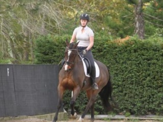 Stunning Elementary Level Dressage Mare