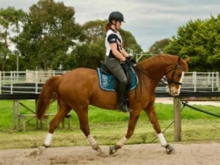 Showjumper / Eventer / Allrounder