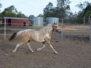 HANDSOME YOUNG PINTO
