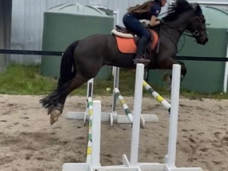 Amazing eventer and all rounder for sale