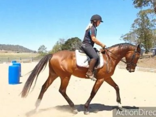 Attractive 7yo QH x Tbred gelding