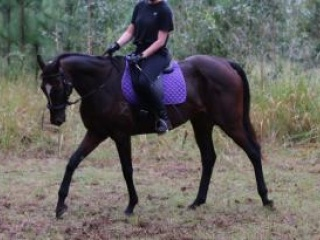 Lovely Thoroughbred mare