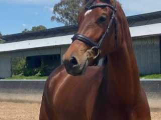 Beautiful 3yo Questing R Filly