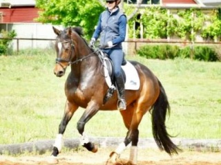 Exceptionally Talented IFS Fuerst Grandios Mare