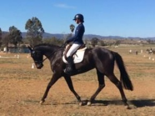 athletic thoroughbred mare