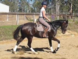Quiet and pretty 5yr old mare