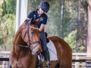 Talented Trainable gelding