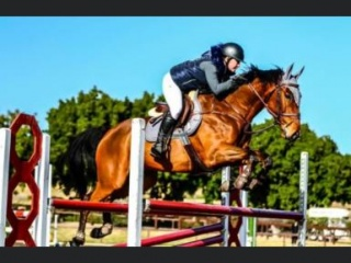 Been there done that 7yo WB X TB GELDING