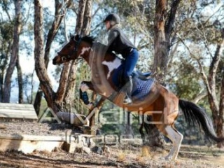 Adult Riding Club in Australian Capital Territory