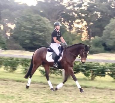 Owner says MUST SELL. Attractive talented gelding