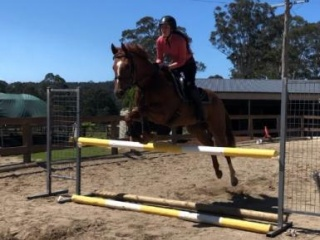 Sweet Thoroughbred mare