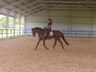 Talented, Sound and Stylish OTTB
