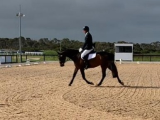Outstanding 4 year old mare