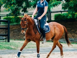 STUNNING GELDING !!! TALENTED AND TRAINABLE