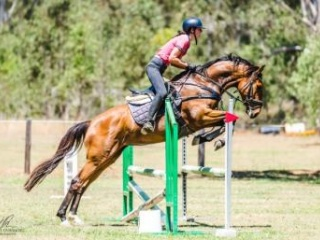 Showjumping Prospect