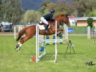 Showjumper/ Eventer