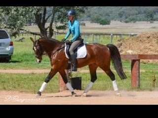 Stunning Gelding with presence and talent