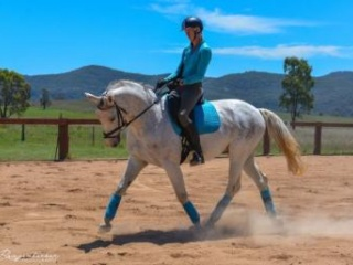 State Champion Gelding for all disciplines