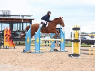 *AMAZING ALLROUNDER OR SHOWJUMPING MOUNT*