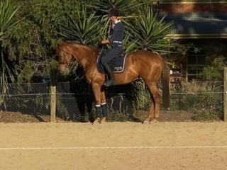 Exceptional Thoroughbred Mare